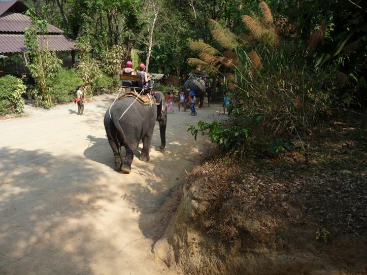 Promenade a dos d'éléphonats photo 09