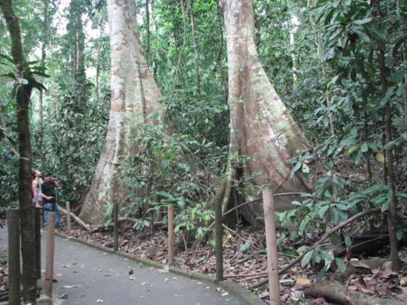 Forêt luxuriante, Universal Trail à La Selva à Sarapiqui